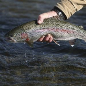 21st Annual Spring Smoky Mountain Trout Tournament